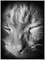 Sleeping B&W cat (alun23) Tags: pets blackandwhite whiskers bw cats cat