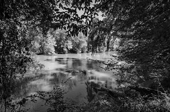 Enoree River at Musgrove Mill BW (rschnaible) Tags: musgrove mill enoree river the south carolina woods forest outdoor landscape historical revolutionary war battle site bw black white photography monotone