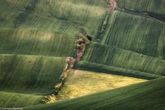 Onde di campagna (SDB79) Tags: molise colline erba grano verde campagna agricoltura
