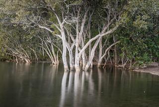 Mangroves West Gosford
