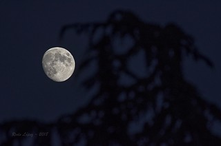 bocado de luna _DSC6910