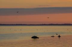 Pastel coloured evening in Öresund (frankmh) Tags: evening sunset hittarp helsingborg skåne sweden öresund