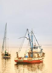 Gone fishin' (Gunn Shots.) Tags: sunrise fishingboat seagull sangiovanni monterey