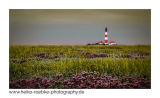 Salzwiesen im Spätsommer / salt marshes in late summer