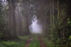 Best Season of the year (der_peste (on/off)) Tags: forest forestpath walkway pathway mist fog misty foggy moody trees woods autumn autumnal fall