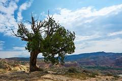 Abiquiu, New Mexico (szeke) Tags: abiquiu newmexico tree desert landscape mountain sky clouds