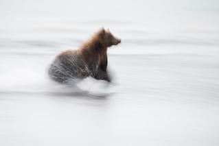 Which Brown Bear motion blur do you like better?