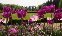 JLF14507 (jlfaurie) Tags: maintenon château castillo palace 22042018 jardin garden tulipes tulipanes tulips mechas gladys amigos friends michel magda sergio primavera printemps pentaxk5ii mpmdf jlfr jlfaurie spring flowers flores fleurs agua eau water canal intérieurs interiores inside