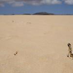 death sand thumbnail