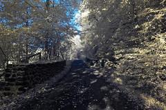 Westerwald in Infrarot (OdenWALDfotograf) Tags: forest wald infrarot infrared summer sommer westerwald