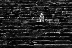 Untold stories (Rk Rao) Tags: bw blackandwhite cat morninglight texture places steps lines oneday human monochrome people portrait fineart fineartphotography art artistic travel incredibleindia beauty design friends naturallight rkrao radhakrishnaraoartist rkclicks radhakrishnarao newdelhi delhi india
