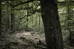 Untitled (mexou) Tags: wood green end summer bark dark luxembourg