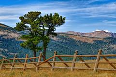 Crowd Control  -  HFF! (Terri Toll) Tags: colorado fence happyfencefriday hff landscape mountains nikon nikond850 d850 outdoor rockymountains trees