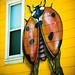 Lady Bug Lady Bug