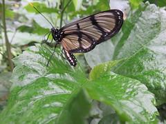 Orléans. Jardin des plantes. (Traveling with Simone) Tags: orléans butterfly papillon france leaf feuille macro closeup bokeh