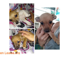Busco un hogar! (Leales.org • tu guía animable) Tags: adopta adoptar adoptanocompres noalmaltratoanimal adopción sebusca extraviado perdido perro gatos lealesorg
