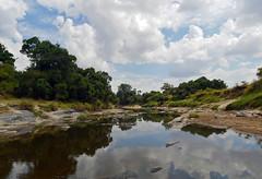 P1050279 (bvohra) Tags: maasaimara kenya maasai mara marariver hotairballoonsafari ashnilmara bigfivegame africa