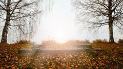 Leaves and light (mirri_inc) Tags: