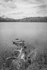 Kintulammi (Markus Heinonen Photography) Tags: kintulammi järvi lake tampere suomi finland maisema landscape waterscape bw black white luonto nature water