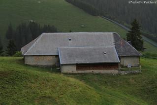 SF_IMG_7709 - Les Traverses, alpine pasture farm, Gruyère region - Switzerland