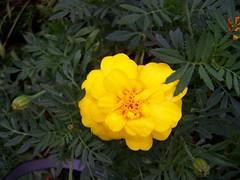 (iloveflowers2) Tags:
