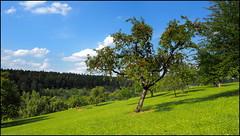 19.08.2018 - Obstbaumwiese im Schwarzwald (HORB-52) Tags: berndsontheimer badenwürttemberg blackforest forêtnoire schwarzwald haiterbach beihingen