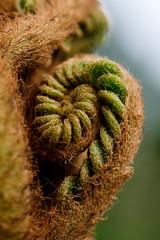 The twirl (ranzino) Tags: kennettsquare longwoodgardens pa pennsylvania flower