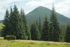 View of Homyak Mountain from Polonyna (Pavlo Kuzyk) Tags: carpathians karpaty mountains firtree landscape view nature canon