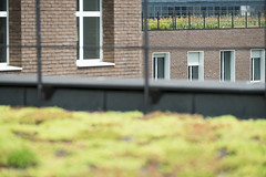 Terrasses du Pôle des Langues et Civilisations (gip-bulac) Tags: plante terrasse sedum poledeslanguesetcivilisations gregoiremaisonneuve bulac brique batiment paris france
