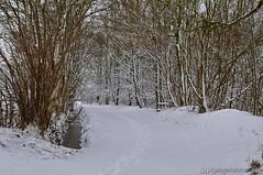 Winterwald (Gelegenheitsknipser) Tags: marcopagel mpfotonet gelegenheitsknipserde 2013 deutschland norddeutschland schleswigholstein sh kreispinneberg pi winter schnee wald landschaft natur waldweg