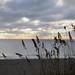 Cocoa Beach, Brevard County 06