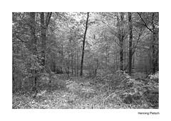 Wald 2018_02 (henningpietsch) Tags: wald forrest baum tree trees bäume blackandwhite schwarzweis sw bw canon canond5markiii sigma20mmf14dghsm sigma sigmallens weitwinkel outdoor imwald wideangle