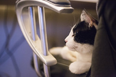 Charlie in a Chair (getsomejelly) Tags: cat chair bokeh shallow depth field black white