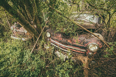 Abstract Chaos (Wayne Stadler Photography) Tags: georgia preserved retro abandoned classic rustography automotive overgrown vehiclesrust rusty junkyard vintage oldcarcity rustographer derelict white