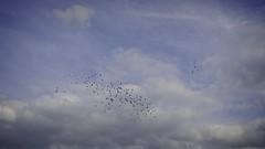2018:08:18 18:15:21 - Birds & Sky - Tarbek - Schleswig-Holstein - Deutschland