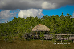 Tiki Hut Observation Deck (tclaud2002) Tags: observation deck observationdeck tiki hut tikihut grass trees clouds cloudy sky bluesky weather nature landscape mothernature outdoors grassywaters preserve grassywaterspreserve westpalmbeach florida usa