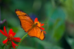 Butterfly Amoung Flowers (WestEndFoto) Tags: agenre natural queueparkep niagarafalls popular submitted bsubject flickr animal wildlifephotography 2017 butterfly flickrjeffpj shows placedesarts ontario canada dgeography flickrwestendfoto naturephotography fother ca