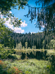 (philippe baumgart) Tags: deutschland schwarzwald germany buhlbachsee see lake forest nature landscape trees