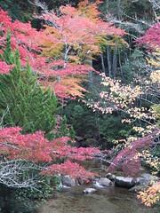 a (47) (hiromi89) Tags: japan beauty beautiful scenery flower wood pond
