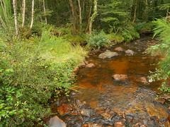 DSCN5659 (norwin_galdiar) Tags: bretagne brittany breizh finistere monts darrée nature landscape paysage
