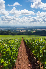Nearing Harvest (Matt McLean) Tags: agriculture grapes grapevines landscape oregon path plants vineyard winery