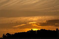 Il Volo (iLaura_) Tags: sunrise birds landscape alba uccelli panorame cielo nuvole clouds