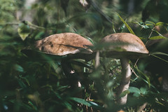 IMG_6031 (andreilazarev) Tags: ilobsterit forest autumn nature green color august september 2018 plant grass tree close up closeup childhood lifestyle lifestyles outdoor deep feeling mushroom food healthy eating vegetable vacation weekend macro happiness travel travelling vision summer moss