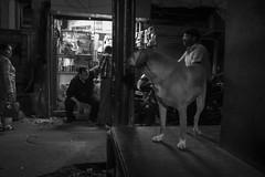 The street (charlesgyoung) Tags: india olddelhi d500 delhi rajasthan charlesyoung karineaignerphotographyexpedition nikon nikonphotography nikondx streetphotography blackandwhite