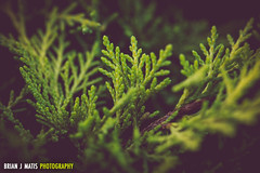 evergreen [Day 3541]