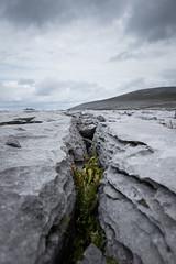 Growing up (fwinkelmann) Tags: growing stones plant green split