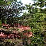 Nella pineta - In the pine forest
