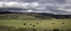 Farmscape (Joe Josephs: 3,166,284 views - thank you) Tags: california californialandscape photojournalism travelphotography californiacentralcoast californiacoast fineart fineartphotography landscape landscapephotography outdoorphotography farm cattle cattlefarm agriculture