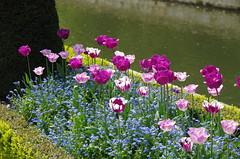 JLF14573 (jlfaurie) Tags: maintenon château castillo palace 22042018 jardin garden tulipes tulipanes tulips mechas gladys amigos friends michel magda sergio primavera printemps pentaxk5ii mpmdf jlfr jlfaurie spring flowers flores fleurs agua eau water canal intérieurs interiores inside