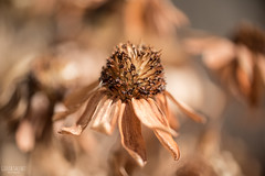C'est bientôt l'automne, 2 (GiuliaSacchetPH) Tags: nikon nikond750 d750 tamron60mm 60mm macro